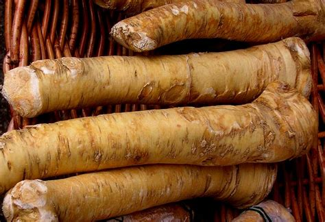 horseradish roots horseradish juice health benefits