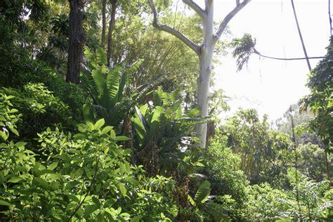 A Visit To Wahiawa Botanical Garden Paiko Wahiawa Botanical Garden