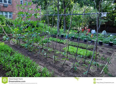Community Vegetable Gardens Community Vegetable Garden Stock Photo Image 49073432