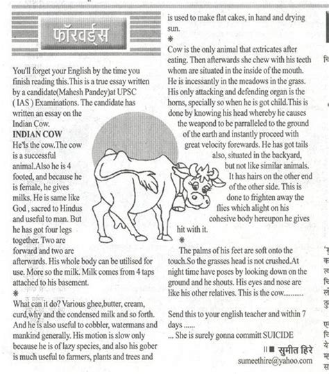 About Cow In Essay by The Cow Essay By Ias Candidate The Learning
