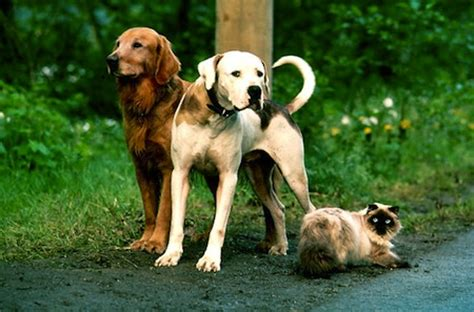 homeward bound dogs fascinating facts about you probably don t