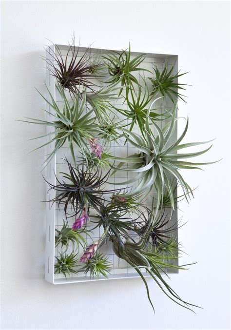air plants bathroom air plants decorations corsa air plants webshop