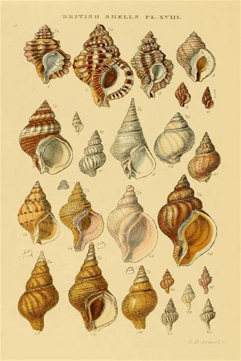 sea weeds shells and fossils classic reprint books seaweed cleopatra and drawings on