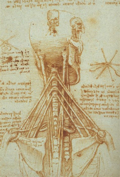 sketchbook wiki file leonardo anatomy of the neck c 1515 jpg wikimedia