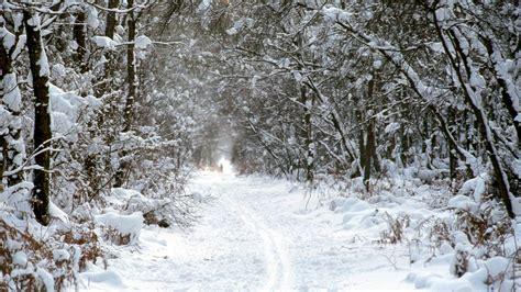 Winterwald Hintergrundbild   1920x1080 HD   Kostenlose