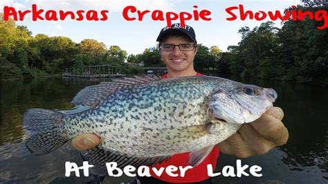 crappie fishing arkansas beaver lake youtube