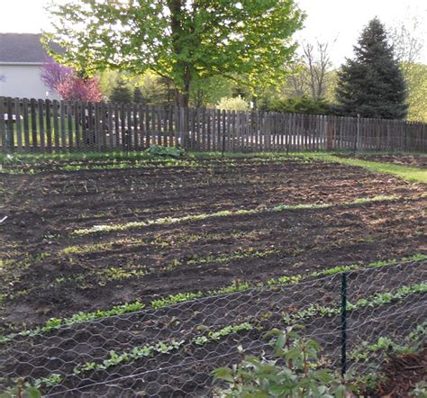 early vegetable garden actions horticulture and