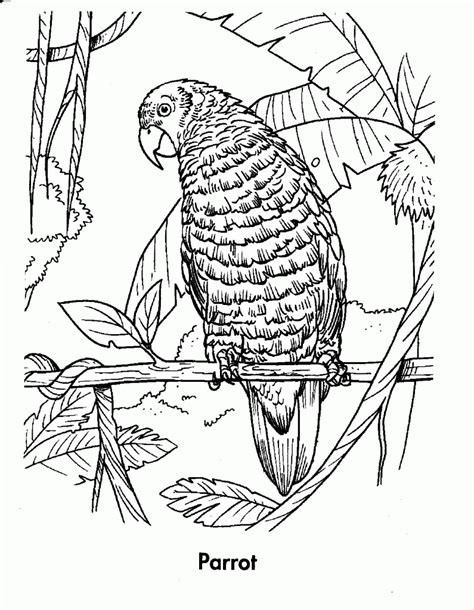 coloring pages of tropical rainforest animals tropical rainforests coloring pages coloring home