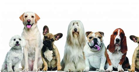 compare breeds best breeds list of favorite breeds for pet owners