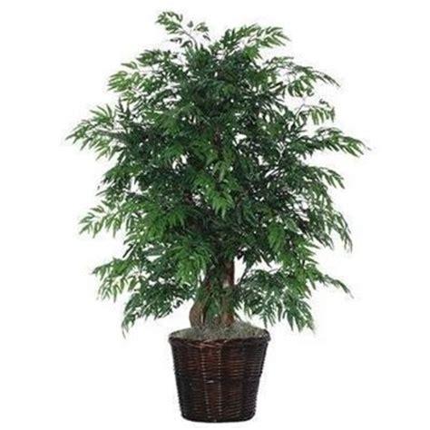alberi in vaso da terrazzo piante da vaso sempreverdi piante da terrazzo piante