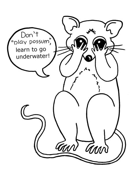 Possum Printable Coloring Pages Possum Colouring Pages