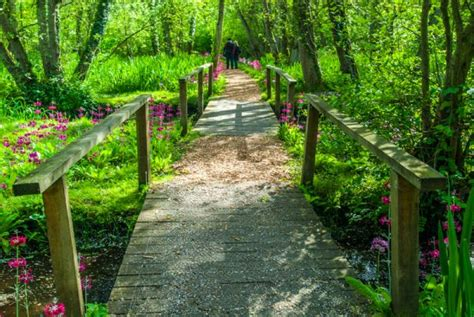 Fairhaven Garden by Fairhaven Garden Trust Norfolk Travel Guide