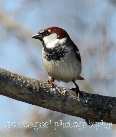 northern illinois birder year round birds in northern