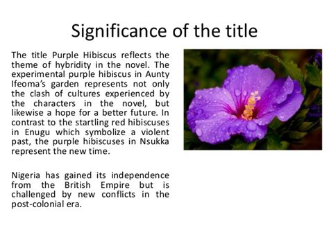 plot summary of the color purple book purple hibiscus