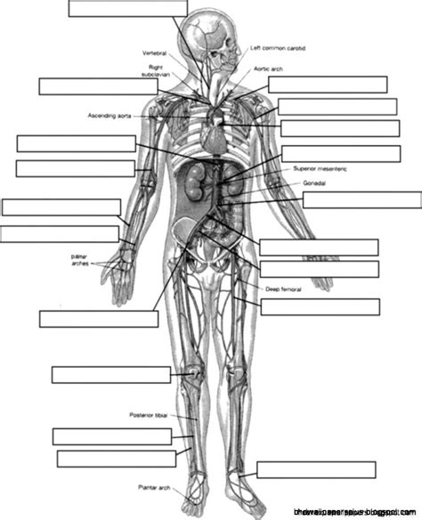 anatomy and physiology coloring workbook answers page 192 simply simple anatomy physiology coloring workbook answers