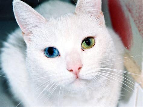 kumpulan foto kucing gambar profile