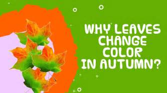 what causes the leaves to change color in the fall why do leaves change color in autumn fall facts about