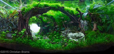 Freshwater Aquascaping Ideas by Aquascape Idea 43 Meowlogy