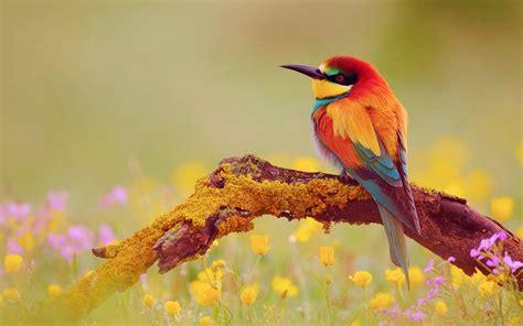 wallpaper cute bird cute bird wallpapers