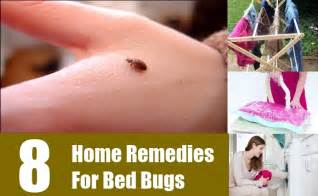 how to bed bugs home remedies 8 home remedies for bed bugs treatments cure