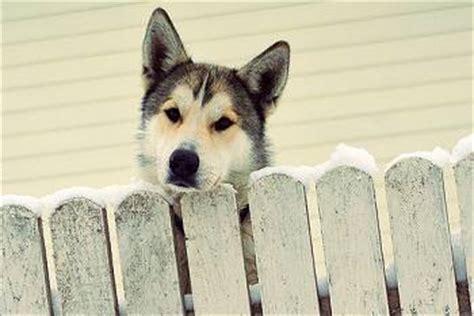 why do dogs run away why do dogs run away