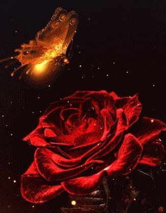 imagenes rojas con movimiento rosas con detalles por san valentin imagen de rosas rojas