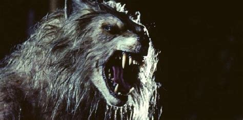 13 must see werewolf movies 5 of the best werewolf movies you must watch part 2