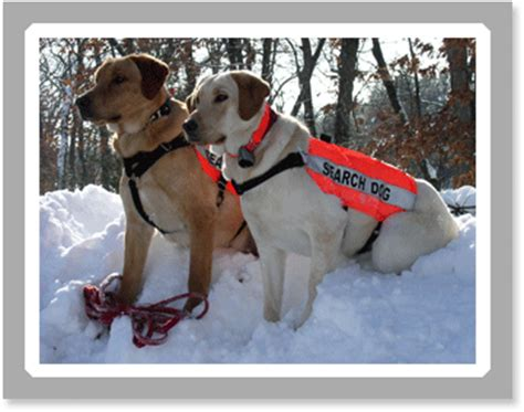 search and rescue dogs k 9 search and rescue koven