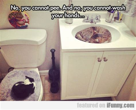 cat peeing in bathtub no you cannot pee and no you cannot wash ifunny com
