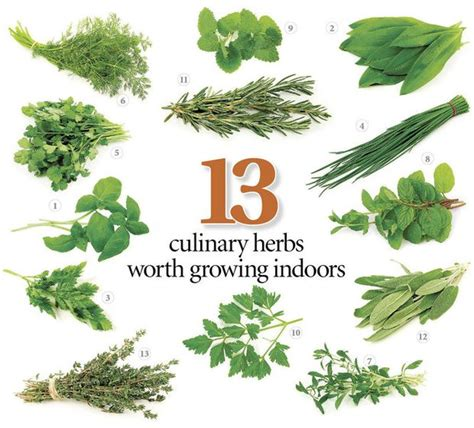 grow herbs in kitchen 13 herbs to grow in your kitchen with tips on getting