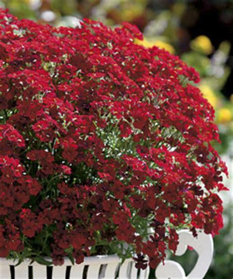 blumen und pflanzen 220 bersicht sommerblumen und stauden - Winterharte Blumen Die Lange Blühen