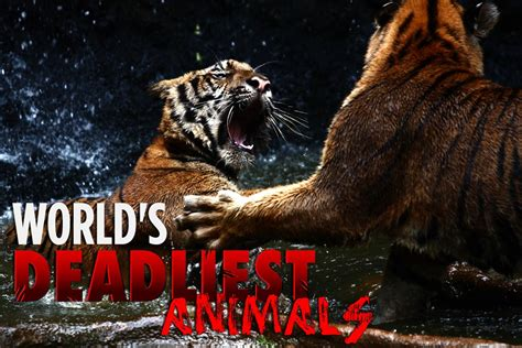 world s world s deadliest animals cure all pest control