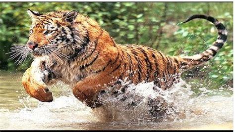imagenes sorprendentes de animales salvajes animales salvajes