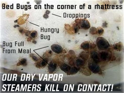 what kills bed bugs instantly can you see bed bugs during the day 28 images how to