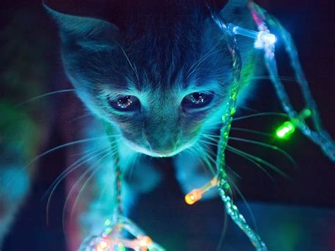 lights cat 1500x500 lights cat header photo