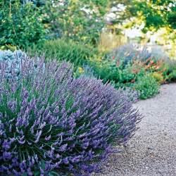 best drought tolerant plants gardens pinterest