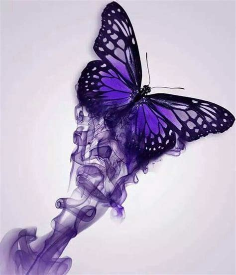 purple butterfly butterflies pinterest butterfly