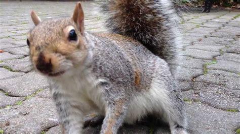 feeding squirrels up close youtube