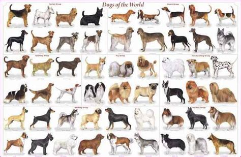 medium sized different medium sized breeds simple image gallery