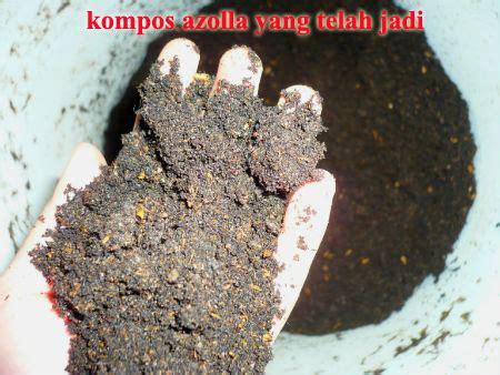 Jual Azolla Kering membuat sendiri pupuk cair dan kompos dari azolla