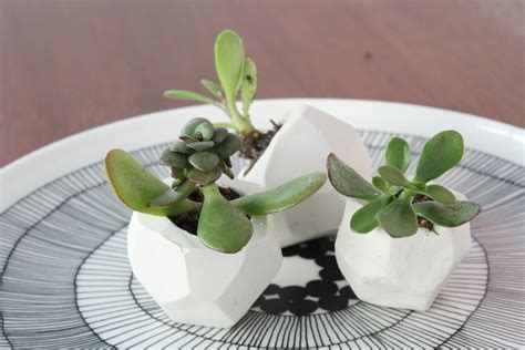 cute succulent pots our diy wedding favor garden merrypad