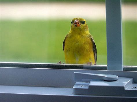 bird flying into house canadian researchers crowdsource solutions to birds flying into windows