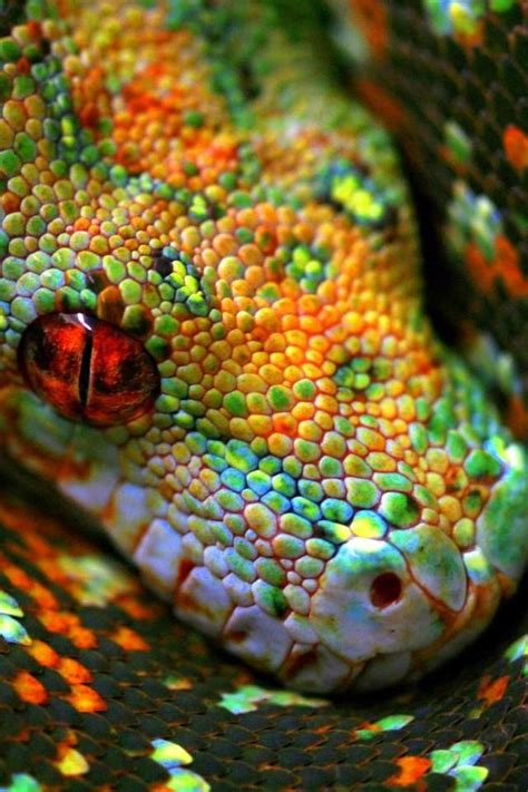 snake colors 25 best ideas about colorful snakes on