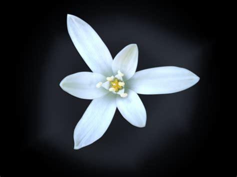 Flora White free white flower stock photo freeimages