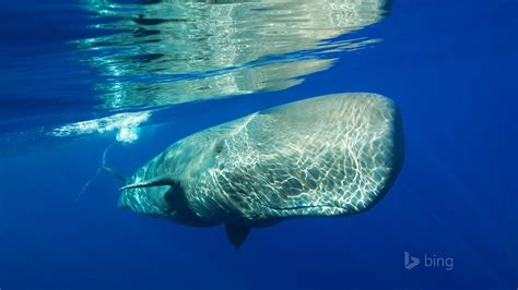 ocean whale bing theme wallpapers preview wallpapercom