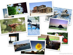 Comment Cr 233 Er Un Collage De Photos En Ligne Tutoriels How To Softonic Premiere Pro Photo Montage Template