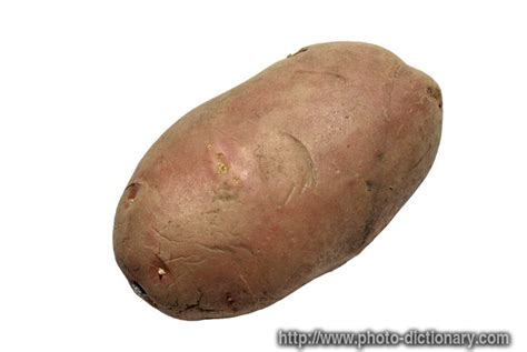 Potato Means by Potato Photo Picture Definition At Photo Dictionary