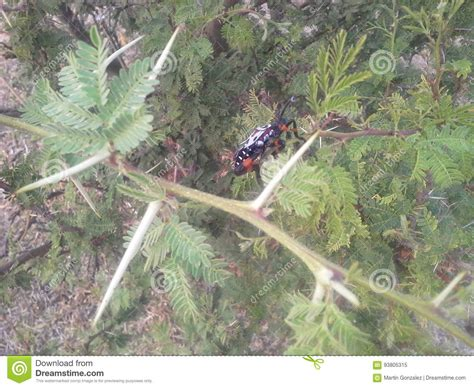bug tree unlimited insect in thorny tree stock image image of insect thorny