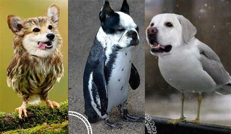 imagenes de animales nuevas especies estas nuevas especies de animales te sacar 225 n m 225 s de una