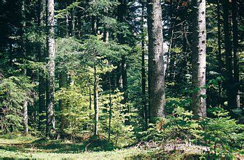 habitat ufficio trento habitat 9130 rete natura 2000 le aree protette